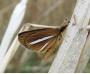 멸종위기 은줄팔랑나비 금강서 348마리 발견…역대 최대