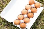 동물복지 달걀, 소비자 인지도·구매 경험 늘어