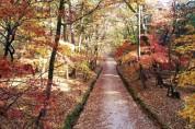 가을에 거닐기 좋은 단풍명소, 조선왕릉으로 오세요
